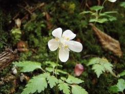 10白い花の群落09-4-28