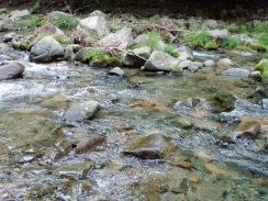 05適水勢の瀬でヤマメが飛び付く09-5-26