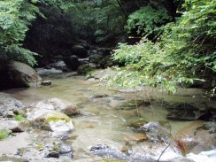 05樹木が張り出した沈み石の瀬09-7-29
