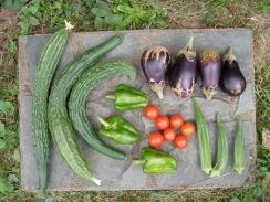 01野菜の収穫09-8-24