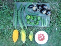 01野菜の収穫09-8-27