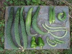 02野菜の収穫09-8-29