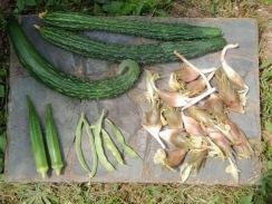 04野菜の収穫09-8-23