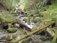 08倒木が増え渓流が荒れてくる 09-8-25