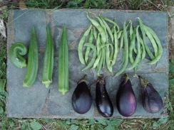 01野菜の収穫09-9-26