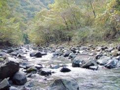02樹木が張り出した小さな段差の浅い瀬09-10-28