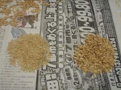 04指で籾殻を剥く09-10-26