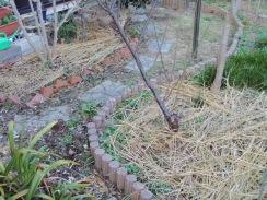 01敷き藁した南面庭09-12-28