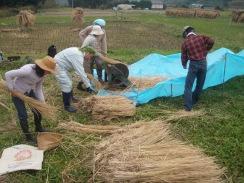 04稲の脱穀09-10-24