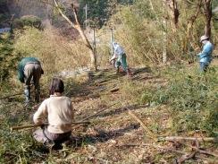 10はさがけ用竹の断裁09-12-26