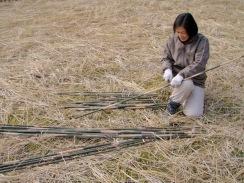 06測量用に竹を切る10-1-31
