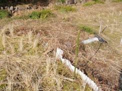 08畦の波板を除去する10-1-31