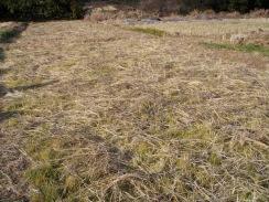 09稲藁の戻入が終わった田んぼ