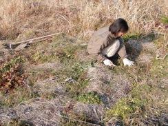 09苗床用に野草を刈る10-1-31