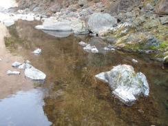 06ヤマメの稚魚が群れる#9の堰堤下流10-2-24