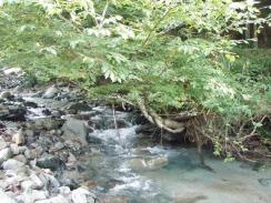 05樹木が低い水深がある良落込み10-7-27