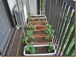 01ミニトマト支柱11-6-27