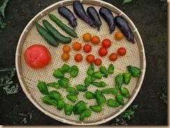 01野菜の収穫Ⅰ11-7-29