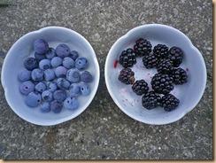 01ブルーベリー・ブラックベリーの収穫11-7-29
