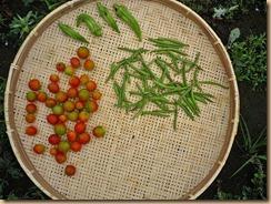 02野菜の収穫Ⅱ11-7-29