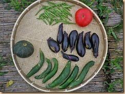 04野菜の収穫Ⅰ11-7-27