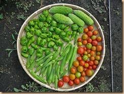 02野菜の収獲11-8-25