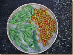 02野菜の収穫11-8-31
