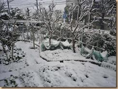 01自宅庭の雪景色12-2-29
