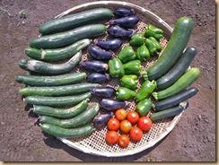 05野菜の生育12-6-30