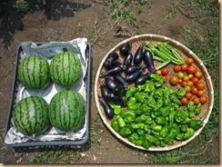 01野菜の収穫12-7-28