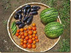 03野菜の収穫12-7-25