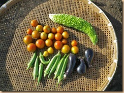 03野菜の収穫12-7-31
