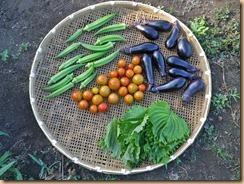 04野菜の収穫12-7-30