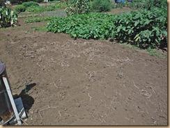 02カボチャ跡地に鶏糞堆肥をスキ込み12-8-20