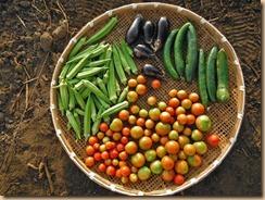 02野菜の収穫12-8-28