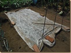 02不織布で保湿12-8-29