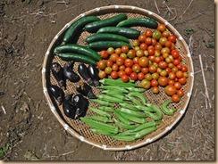 03野菜の収穫12-8-20