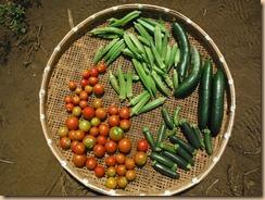 04野菜の収穫12-8-30