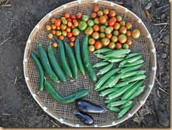10野菜の収穫12-8-26