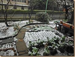 01自宅菜園雪景色13-2-19