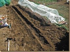 01小玉スイカ西側にボカシ肥料埋設13-4-28