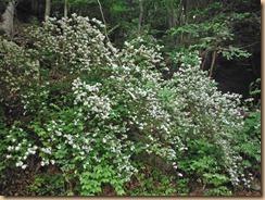09卯の花13-5-28