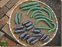 03野菜の収獲13-6-15