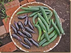 04野菜の収獲13-6-24