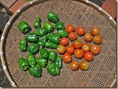 05野菜の収獲13-6-27