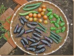 05野菜の収獲13-6-28