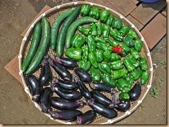 03野菜の収獲13-7-10