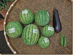 03野菜の収獲13-7-28
