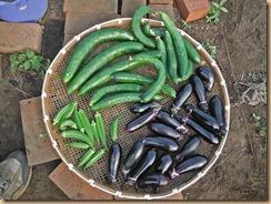 05野菜の収獲13-7-13