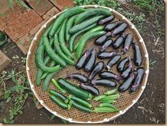 05野菜の収獲13-7-25